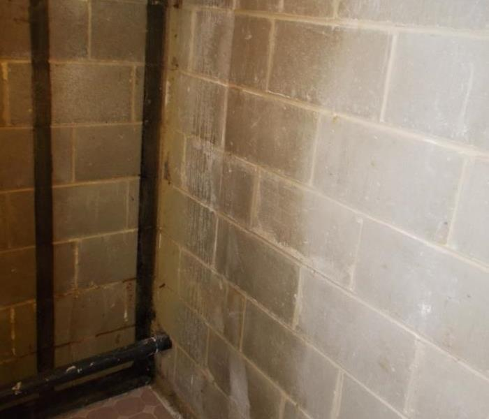 Basement Mold Remediation