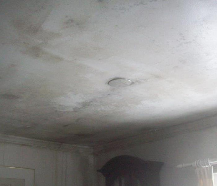Severe Mold Remediation